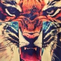 На картинке свитшот с тигром (оранжевый), крупный план.