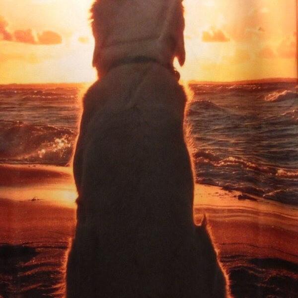 На картинке свитшот с собакой на закате, крупный план.