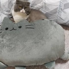 Подушка игрушка Пушин кэт (Pusheen the cat) 5 вариантов